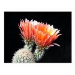 Flores del cactus postal