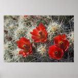 Flores del cactus póster
