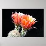 Flores del cactus poster