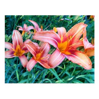 Flores del campo tarjeta postal
