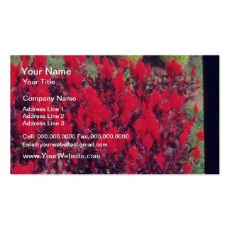 Flores del Celosia (Celosia) Tarjeta De Negocio