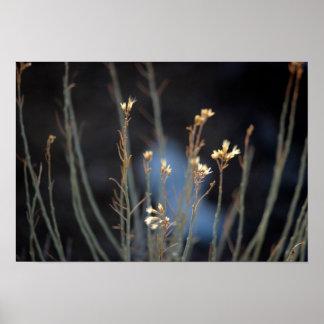 Flores del cepillo de conejo en invierno póster