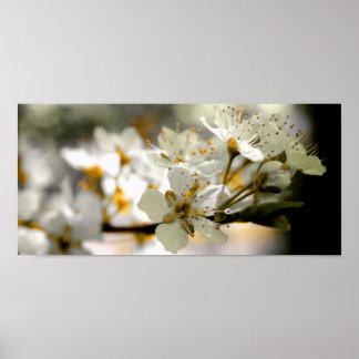 Flores del ciruelo póster