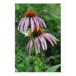 flores del cono postal
