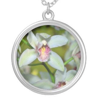 Flores del Cymbidium Joyerias