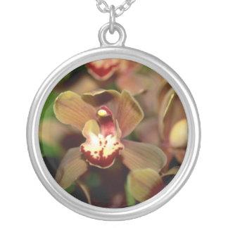 Flores del Cymbidium de Brown Grimpolas