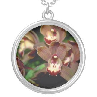 Flores del Cymbidium de Brown Grímpola