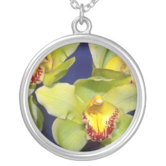 Flores del Cymbidium de la cal Joyerías