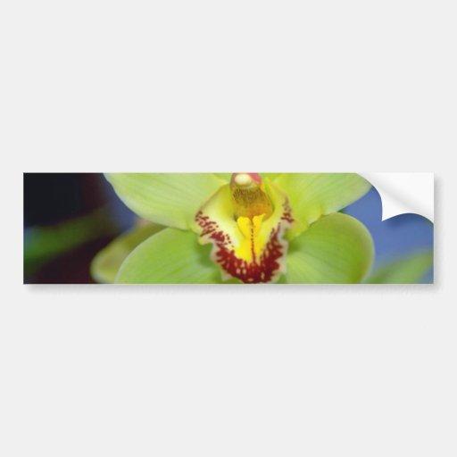 Flores del Cymbidium de la cal Pegatina Para Auto