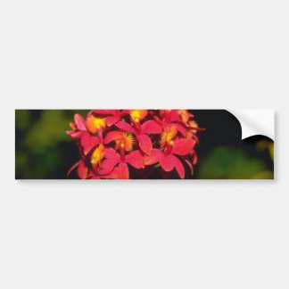 Flores del Dendrobium Pegatina De Parachoque