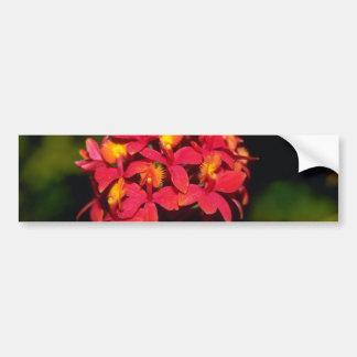 Flores del Dendrobium Etiqueta De Parachoque