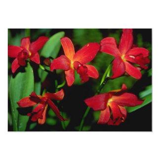 Flores del Dendrobium Anuncios