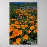 Flores del desierto posters