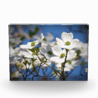 Flores del Dogwood