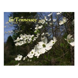 Flores del Dogwood Tarjetas Postales