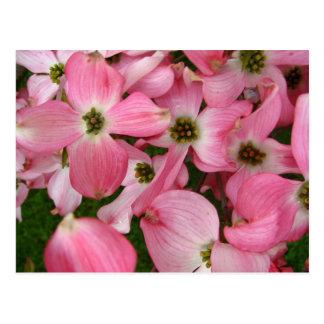 Flores del Dogwood Tarjeta Postal