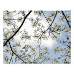 Flores del Dogwood y cielo azul Fotografias