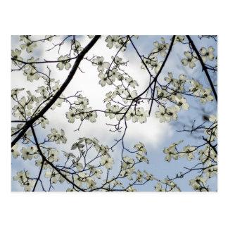 Flores del Dogwood y cielo azul Postales