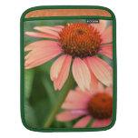 Flores del Echinacea del melocotón Fundas Para iPads