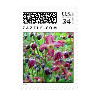 Flores del Epimedium - pequeño sello