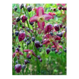 Flores del Epimedium Postales