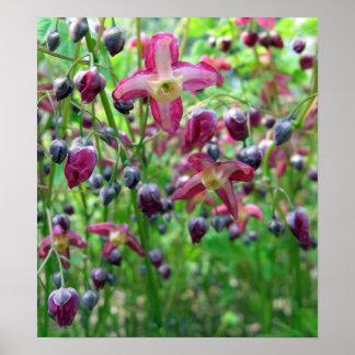 Flores del Epimedium Póster