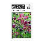 Flores del Epimedium - sello medio