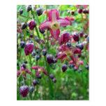 Flores del Epimedium Tarjeta Postal