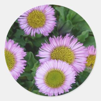 Flores del Erigeron Pegatina Redonda