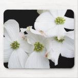 Flores del este del Dogwood - Cornus la Florida Mouse Pad