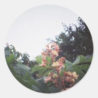 Flores del flor de la castaña de caballo pegatina redonda