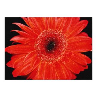 Flores del Gerbera Invitacion Personal
