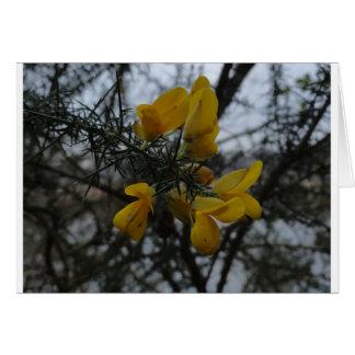 Flores del Gorse Tarjeta De Felicitación