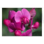 Flores del guisante felicitacion