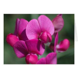 Flores del guisante tarjeta de felicitación