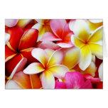 Flores del Hawaiian de la flor de Hawaii del Frang Tarjetón