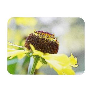 Flores del Helenium del día lluvioso Imán Rectangular