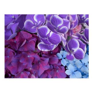 Flores del Hydrangea Tarjetas Postales