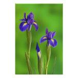 Flores del iris arte con fotos