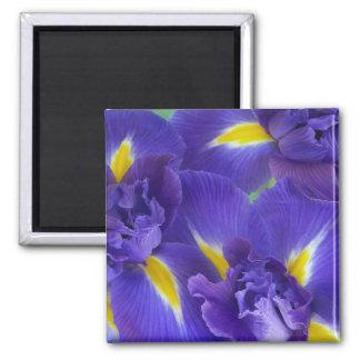 Flores del iris iman de nevera