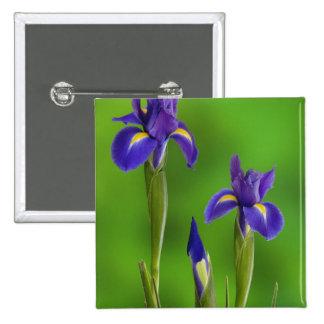 Flores del iris pin cuadrado