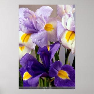 Flores del iris póster