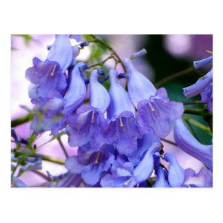 Flores del Jacaranda Tarjeta Postal