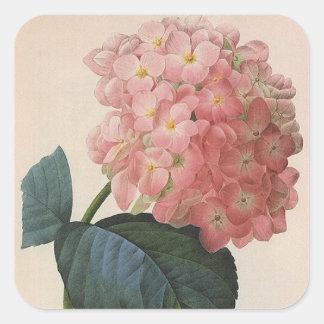 Flores del jardín del vintage, Hortensia rosado Pegatina Cuadrada