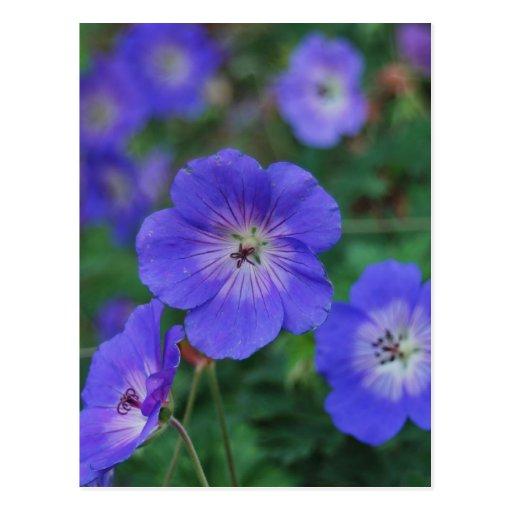 Flores del jardín postales