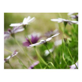 Flores del jardín tarjetas postales