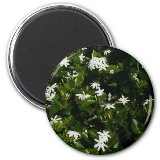 Flores del jazmín imán redondo 5 cm