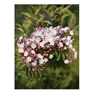 Flores del laurel de montaña postales
