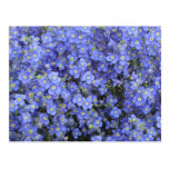 Flores del lino en los jardines de Longwood, Penns Postal