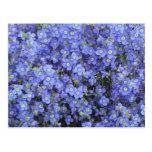 Flores del lino en los jardines de Longwood, Postal